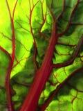 Closeup of swiss chard Stock Photo
