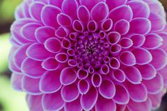 Symmetrical pink flower Royalty Free Stock Photos