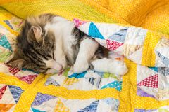 Tabby cat resting in colourful quilt cover. Closeup of tabby cat resting in colourful quilt cover stock image