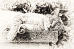 Closeup of a tabby cat sleeping with sunbathing Stock Photography