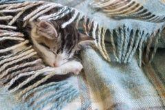 Detail of tabby kitten sleeping on woollen blanket. Closeup of tabby kitten sleeping on woollen blanket Stock Image