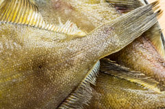 Closeup of the tail and fins flatfish. Closeup of the tail and fins fresh flatfish Stock Image