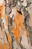Pine tree bark background Royalty Free Stock Photos