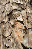 Tree rind background Royalty Free Stock Photo