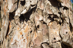 Tree rind background Stock Image