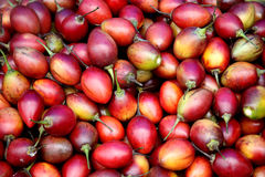 Closeup of tamarillos in a market Royalty Free Stock Photography
