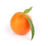 Closeup of a tangerine Royalty Free Stock Photo