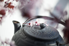 Closeup on teapot for Japanese tea lovers with feng shui. Traditional Japanese teapot with cherry blossom flowers for zen and relaxation Stock Image