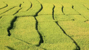 Closeup terraced rice field Royalty Free Stock Image