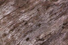 Closeup of Texture and Grain on Tamboti Stump Royalty Free Stock Photography