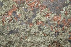 Closeup texture of granite rock Stock Photo
