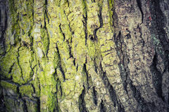 Closeup texture of old green tree bark, detailed photo Stock Image