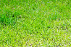 Closeup textured of green grass background. Concept for environmental protection and the green world Stock Image