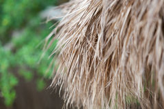 Closeup of thatch roof background. Closeup of an old thatched roof background Royalty Free Stock Images