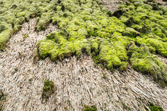 Closeup of a thatched roof covered with earth and moss Stock Photo