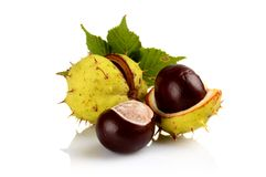 Closeup three chestnuts with leaf isolated on a white Royalty Free Stock Photo