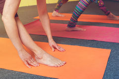 Closeup of three females practicing yoga on mats. Closeup of three females exercising on mats, doing yoga practice in class. Body balance training. Fitness and Stock Photography