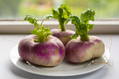Closeup of three organic purple turnips with leaves Stock Photo