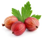 Three red gooseberry berry with leaf on white stock photos