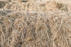Closeup of tied rolls of hay in a row Royalty Free Stock Images