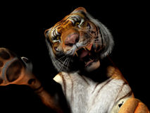 Closeup of tiger attacking. A closeup of a tiger attacking the camera Royalty Free Stock Image