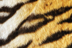Closeup of tiger fur with beautiful stripes Royalty Free Stock Image