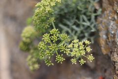 Closeup of tiny flowers growing on rocks stock images