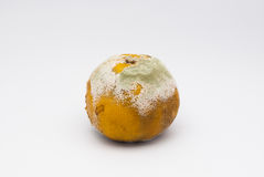 Closeup to Bad Smell Rotten Orange on White Background/ Isolated.  royalty free stock photos