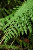 Green fronds of a fern Royalty Free Stock Images