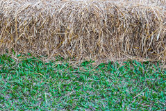 Closeup to Horizontal Half of Straw and Grass Background Royalty Free Stock Photo