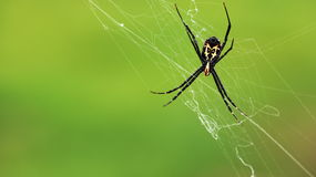 Closeup to spider Royalty Free Stock Image