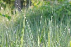 Closeup to spring grass blades Stock Photo