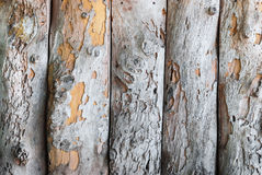 Closeup to Vertical Old Wood Board Wall Background Royalty Free Stock Image