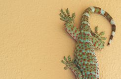 Close up Tokay Gecko is on The Wall. Closeup Tokay Gecko is on The Wall royalty free stock photos