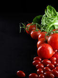Closeup of tomatoes on the vine Royalty Free Stock Image