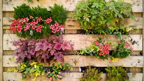 Closeup toned image of flowers, grass and bushesh growing in small pots on decorative vertical wooden wall on building