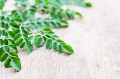 Closeup top view moringa leaves branch, herb and medical concept. Closeup top view moringa leaves branch, herb and medical stock photos
