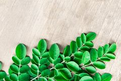 Closeup top view moringa leaves branch, herb and medical concept. Closeup top view moringa leaves branch, herb and medical royalty free stock photo