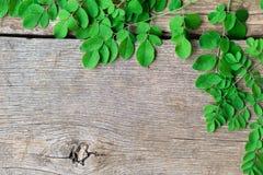 Closeup top view moringa leaves branch, herb and medical concept. Closeup top view moringa leaves branch stock photos