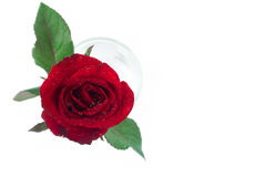 Closeup top view red rose color water glass on white background, Stock Photos