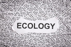 Closeup torn pieces and tapes of paper with the word ECOLOGY. Stock Photo
