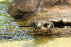 Closeup of a Tortoise Stock Photo