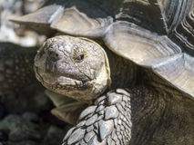 Closeup of tortoise Stock Photo