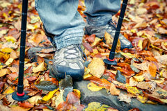 Closeup of tracking shoes and poles. On autumn leaves Stock Image