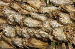 Closeup traditional solar dried fish. Show traditional food prepare concept Stock Image