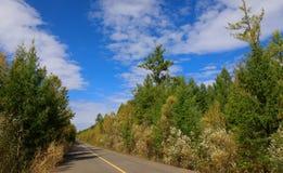 Trail through colorful autumn forest. Closeup of trail through colorful autumn forest Stock Image