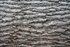 Closeup of Tree Bark. This is a closeup image of the pattern of tree bark royalty free stock image
