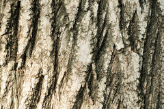 Closeup of Tree Bark Stock Photography