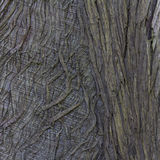 Closeup of Tree Bark for Abstract Textured Background royalty free stock photography