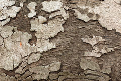 Closeup of Tree Bark Royalty Free Stock Photography